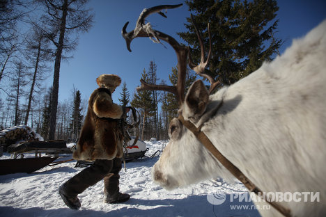 The winter camp of nomad reindeer breeders from the Sychegir clan is located in the Irkutsk Region.