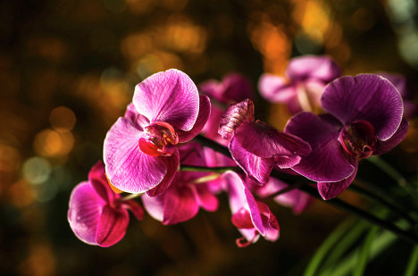 Winter Orchid Festival at Moscow State University's Botanical Garden ...